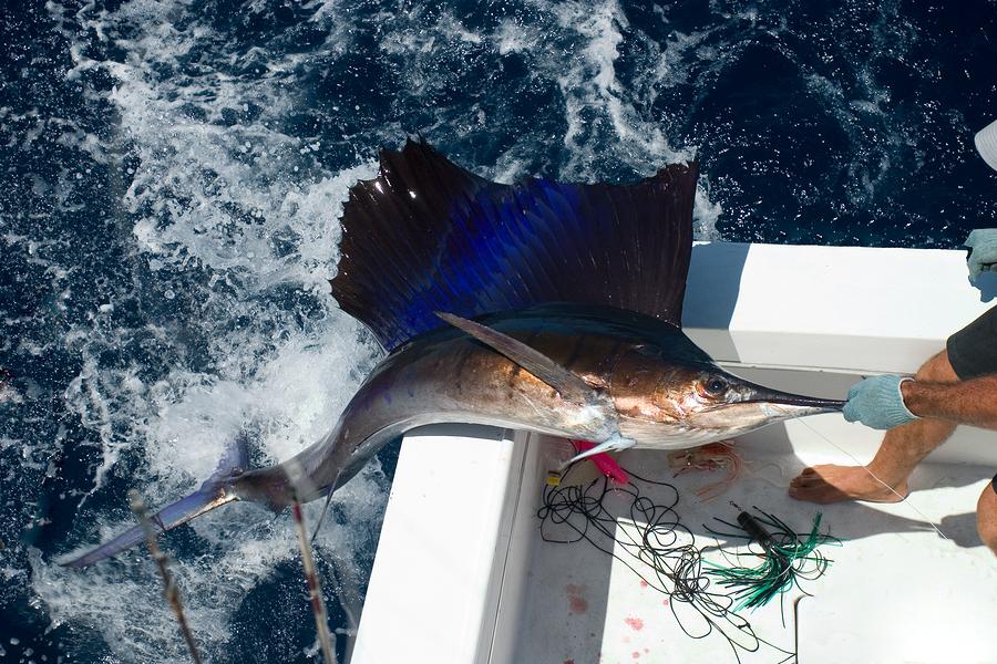 Fishing – The Best Catch in Puerto Vallarta